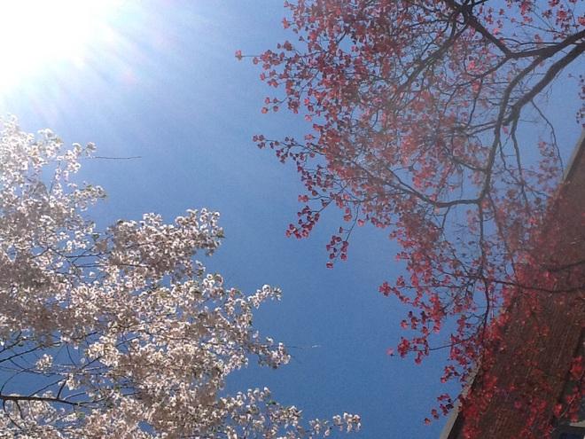 박하사탕[2015-05-03]